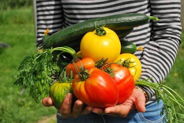 Bepflanzung im Schreibergarten - Obst, Gemüse, Kräuter